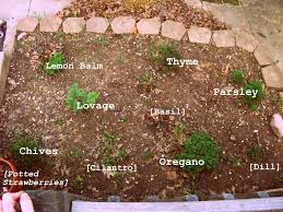 Herb Garden Layout The Of A Novice The Sad Herb Garden