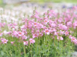 drought tolerant plants that can be left for the summer saga