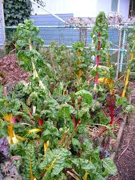 oregon coast gardener winter vegetable gardening on the coast