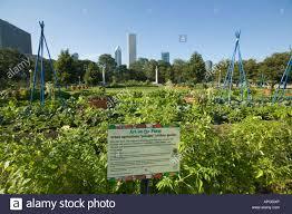 in the kitchen vegetable potager garden kontosoros restaurant and