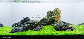 Aquascape Maintenance Interview With George Farmer