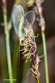 native plant restoration restoring the landscape with native plants
