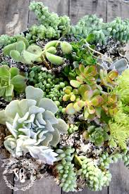 how to plant succulents beautifully stonegable