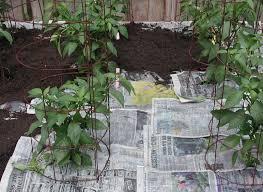 organic mulch dr tohid nooralvandi pulse linkedin
