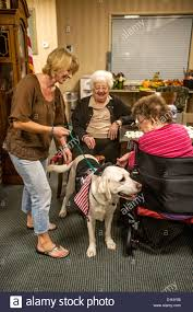 halloween costumes ca volunteers bring therapy dogs in halloween costumes to a