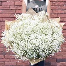 baby s breath rosita flowers white flowers baby s breath