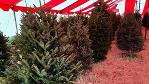 tree shortage pushing prices up keye