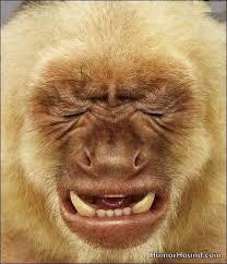 Monkey Face Meme - crying monkey face quickmeme
