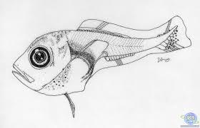 ocean fish drawings images reverse search