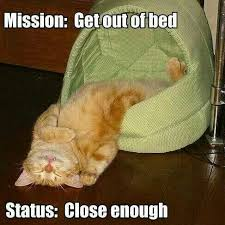 Not A Morning Person Meme - cute kittens quotes domination google search makes you squeal