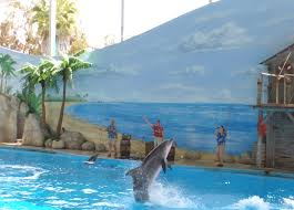 Vallejo Ca Six Flags File Six Flags Discovery Kingdom Dolphin Show Jpg Wikipedia