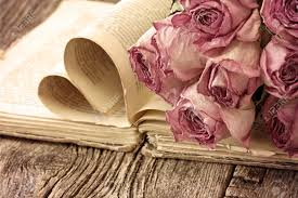 Drying Flowers In Books - dry roses on an old book in a vintage style stock photo picture