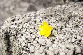 free images nature grass rock plant leaf bloom sadness