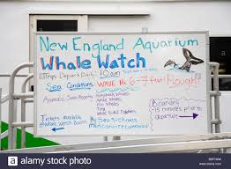 whale watching tour boat new england aquarium long wharf boston