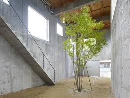 a single tree grows inside suppose design office s house in yagi