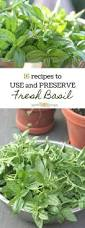 15 recipes to use and preserve fresh basil