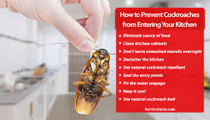 how to clean cupboards after pest how to prevent cockroaches from entering your kitchen