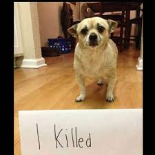 Dog Shaming Meme - dog shaming what the actual fuck by quhzk meme center