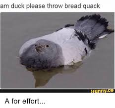 A For Effort Meme - am duck please throw bread quack funny a for effort funny meme on