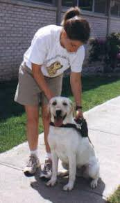 Leader Dogs For The Blind Jobs On The Job And After Hours How Guide Dogs Work Howstuffworks