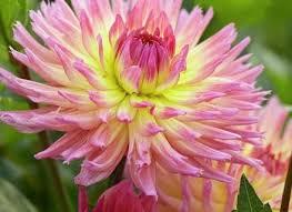 best 25 flowers for cutting garden ideas on pinterest cut dunneiv