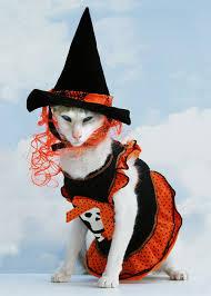 Cat Halloween Costumes Cats 125 Pets Halloween Costumes Images Animals