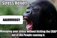 Funny Stress Memes - caption this write your own funny caption https www facebook