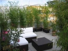 pflanzen fã r den balkon sichtschutz bambus balkon new balcony terrace