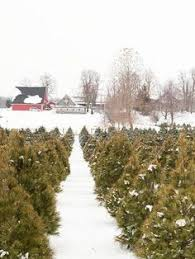 snowy christmas tree farms google search lotq pinterest