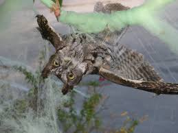 can fake halloween cobwebs and decorations harm wildlife