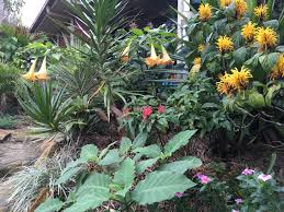 Tropical Plants Gardens Pin By Letty Gonzalez On Tropical Gardens Pinterest Tropical