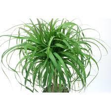 indoor palm palm indoor plants garden plants u0026 flowers the home depot