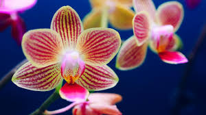 orchids pictures 5 ways to keep your orchid alive sunset magazine
