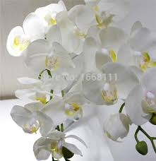 wedding flowers orchids orchids 73cm real touch orchid phalaenopsis 8 heads for