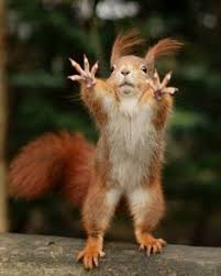 Dramatic Squirrel Meme - softball quotes funny memes google search funny pinterest