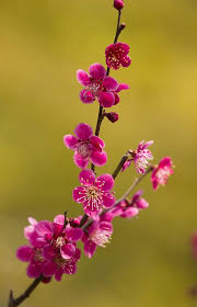 Japanese Flowers Pictures - 11 best flowers images on pinterest beautiful butterflies