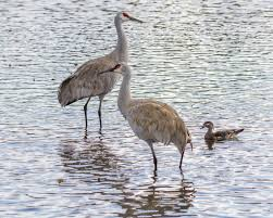 crane in the water u2014 stock photo 105383820
