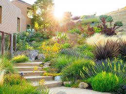 landscaping without grass sunset