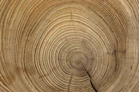 wood tree rings images Second life marketplace tree rings wood end textures jpg