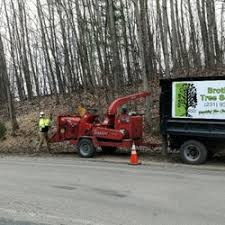brothers tree service tree services 1260 smith rd traverse