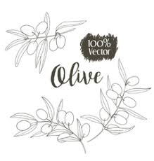 olive u0026 tree vector images over 2 500