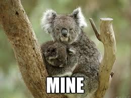 Koala Meme - clingy koala memes quickmeme
