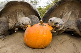 animals halloween animals halloween elephant san diego zoo galapagos tortoise sdzoo u2022