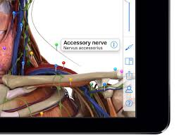 App For Anatomy And Physiology Human Anatomy App Archives Pocket Anatomy