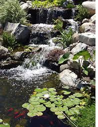Pictures Of Backyard Waterfalls by Water Gardens Design U2013 The Pond Digger