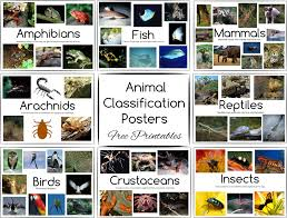 get 20 animal classification ideas on pinterest without signing