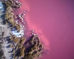 Pink Lake Sw0071 Pink Lake U2013 Salty Wings