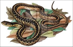 snakes full color u0026 line art illustrations at inkart net