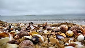 photography seashells sea seashell hd wallpapers 1920x1080 for hd