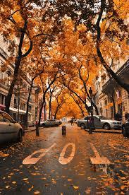 25 fall trees photography ideas fall trees